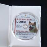 森田誠 柴犬のコマキちゃん