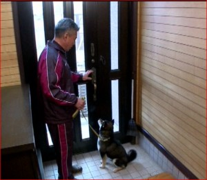 藤井聡の犬のお散歩のしつけ