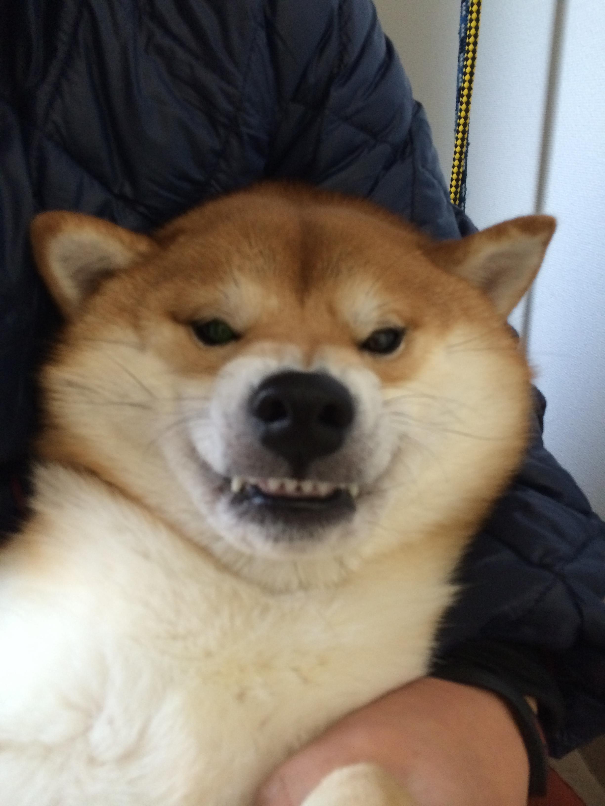 森田誠の犬のしつけ法体験談
