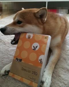 遠藤和博DVDと柴犬