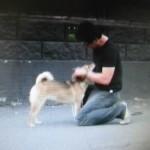 森田誠の犬のしつけ