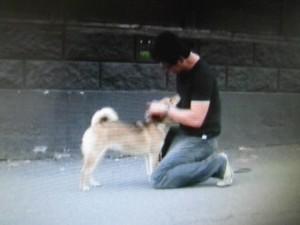 森田誠の犬のしつけやり方