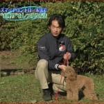 遠藤和博の犬のしつけ