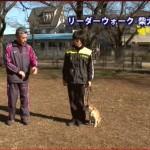 藤井聡の犬のしつけ
