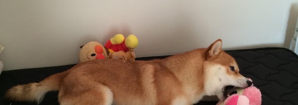 森田誠と遠藤和博と藤井聡の犬のしつけ法◆主従関係の築き方はどれがいい?